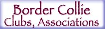 Border Collie Clubs & Association Button