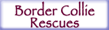 Border Collie Rescue Button