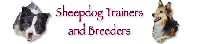 Border Collie Trainers & Breeders Heading